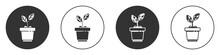 Black Plant In Pot Icon Isolat...