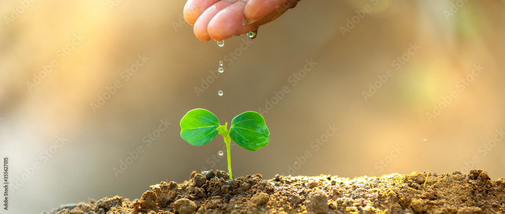 Fototapeta Environment day concept. Drop water on hand for growing tree. Protect the environment. Renewable energy for future. Global warming concept. Sustainable resources background for web banner.