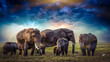 Beautiful Images of African Elephants in Africa with blue sky