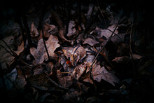 Mouse In The Fallen Leaves