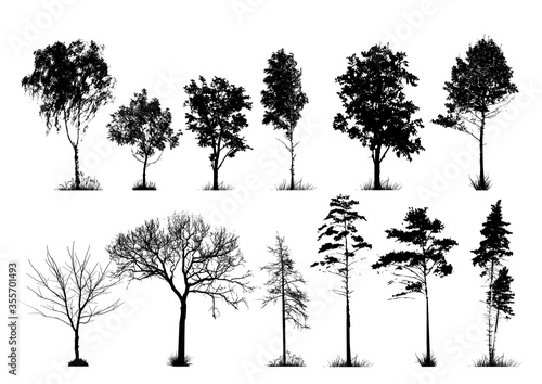 Fotografía A set of silhouettes of trees. Vector illustration