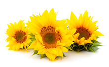 Group Of Yellow Bright Beautif...