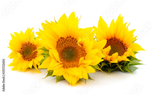 Fotografering Group of yellow bright beautiful sunflower flowers.