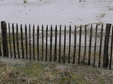 A Fence Built From Irregular Round Wooden Posts Connected By Barbed Wire. Behind The Barrier, The Base Of A Dune, In The Foreground A Cluster Of Weeds Growing In Sandy Soil