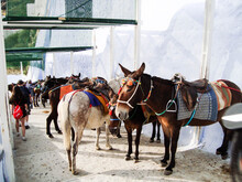 Little Donkeys For Horse Ridin...