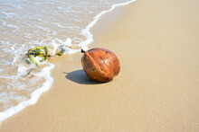 Brown Coconut And Sea Weed On ...