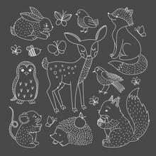 Woodland Animal Clipart Set. H...