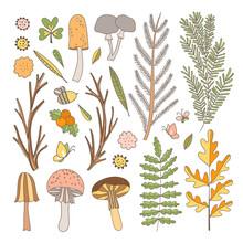 Forest Botanical Vector Set. H...