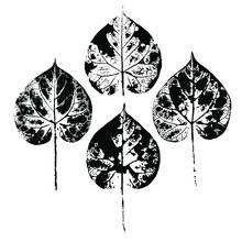 Imprint Of A Natural Leaf Of G...