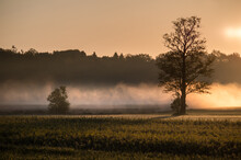 Morning Mist Over The Field