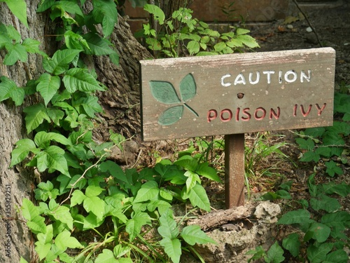 Photo Wooden sign warning of poison ivy in a wooded area,