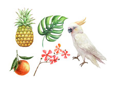 Set Of Watercolor Illustrations Of Tropical Fruits Plants And White Cockatoo Parrot, On A White Background
