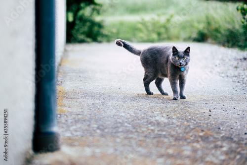 Photo Adorable chat gris sur une terrasse en béton
