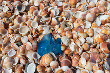 Top View Of The Blue Jellyfish Close-up On Multi Colored Sea Shells On The Mediterranean Coast