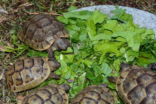 Valokuva Turtles hatchlings while eating
