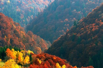 Panel Szklany Góry beautiful autumn morning dawn, fabulous Carpathian hill covered forest on background valley in fog and far mountains on horizon, amazing sunrise nature image, Ukraine, Europe, Carpathian mountains