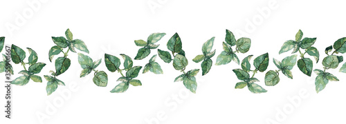 Fototapeta Seamless herbal border of green basil twigs and leaves isolated on white. Watercolour illustration. For duct tape, textile, stationary, recipes and packaging design. obraz