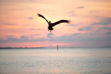 Pelican Flying And Diving Agai...