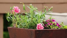 Square Planter With Mini Pink Geraniums