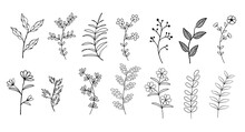 Collection Of Flower Herbs Nat...