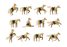 Set Of Vector Horses Isolated ...