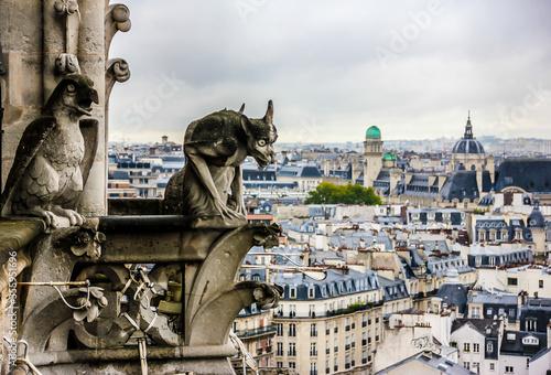 Fotografie, Obraz Mythical creature gargoyle on Notre Dame de Paris