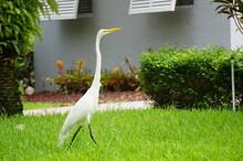 Crane/Egret/Heron Bird Roaming...