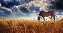 Horse Grazing In Field With St...