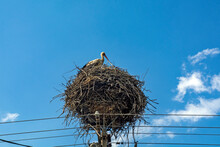 Stork On The Electric Pole