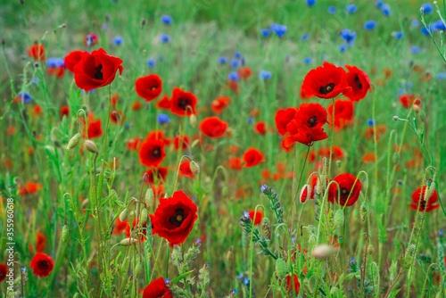 Piękna polana z polnymi kwiatami - fototapety na wymiar