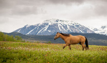 Outfitter Quarter Horse In The...