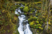 Water Stream In Mossy Forest. Green Natural Background