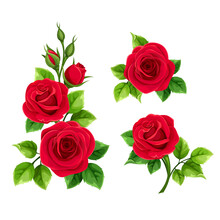 Vector Set Of Red Roses Isolated On A White Background.