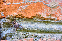Spider Sits On A Brick General Plan Color