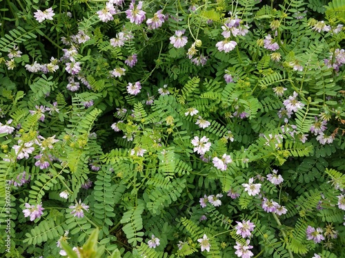 green plant with violet flowers