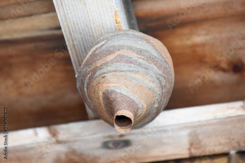 Fotografie, Obraz この逆さ徳利の制作者はトックリ蜂ではなくコスズメバチです。