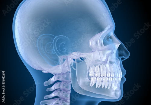 Human head in xray view. Medically accurate 3D illustration Canvas Print