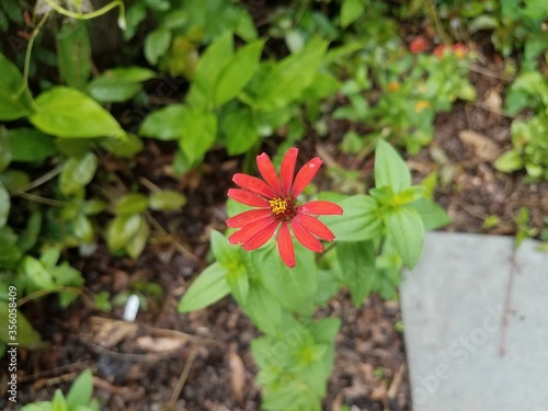 green plant with red flower