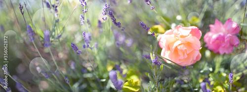 Photo Atmospheric garden impressions