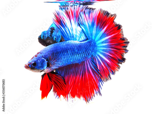 oil paint  siames fighting fish..betta splendens fish.and white background.