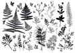 Set of silhouettes of botanical elements. Branches with leaves, herbs, wild plants, trees. Garden and forest collection of leaves and grass. Vector illustration on white background - Vector Graphics