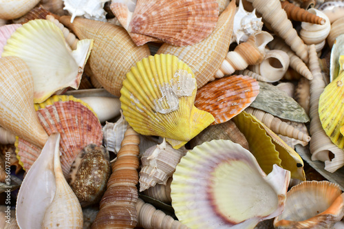 many colorful seashells of different shapes and sizes Fototapeta
