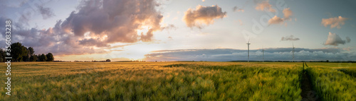 Obraz Panorama view of beautiful countryside scene cultivated fields with wind turbines. Rural landscape with green wheat field in countryside - fototapety do salonu