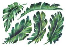 Set Of Tropical Leaves. Botani...
