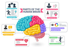 Functional Areas Of The Human ...