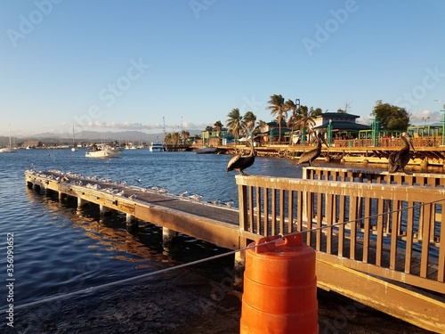 Photo pelicans and pier in La Guancha in Ponce, Puerto Rico