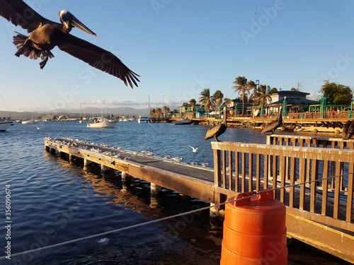 Fotomural pelicans and pier in La Guancha in Ponce, Puerto Rico