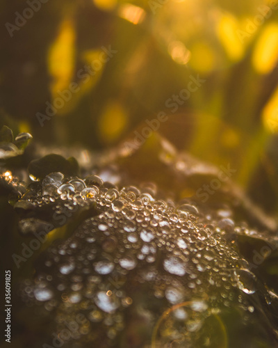 Photo plant by a field at sunset with beautiful droplets
