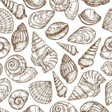 Sketch Shells Pattern. Hand Drawn Background In Engraving Style. Vector Background For Textiles, Packaging, Decor.