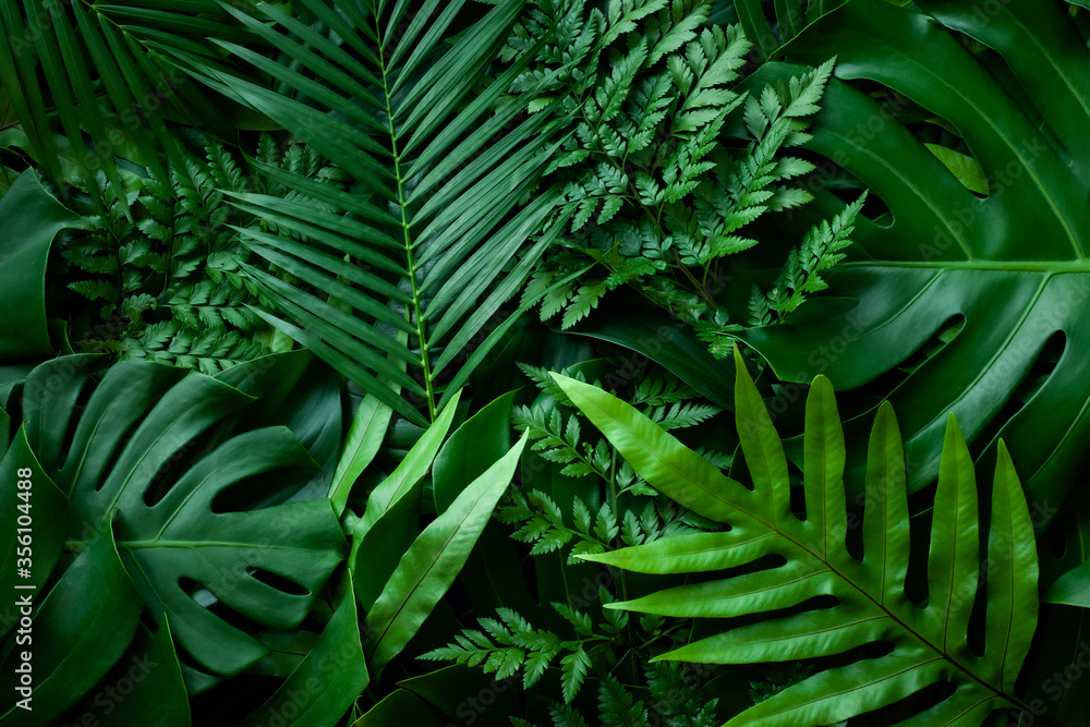 Fototapeta closeup nature view of green monstera leaf and palms background. Flat lay, dark nature concept, tropical leaf